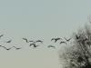 maretak en kraanvogels, Argonne....