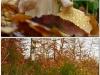 witte kluifzwam en spechteninktzwam