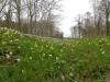 voorjaar in de Argonne