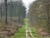 forêt de Lisle