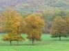 herfst in Passavant