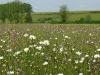 bloemrijk hooiland in Senard