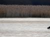 ratrace on ice