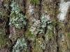 kleurrijke camouflage van de diana-uil