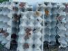 inventarisatie nachtvlinders, foto Rik Desmet